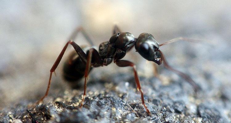 best ant baits