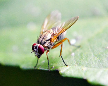 Fruit Fly Trap Reviews – The Best Fruit Fly Traps in 2020