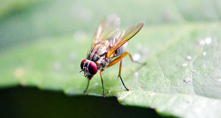 Fruit Fly Trap Reviews – The Best Fruit Fly Traps in 2019