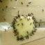 boric acid for ants
