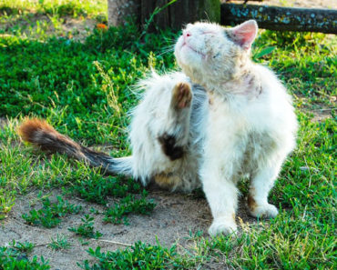 The Complete Guide to Using Diatomaceous Earth for Fleas