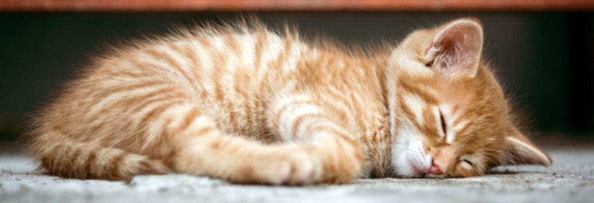 how to use tea tree oil to repel fleas