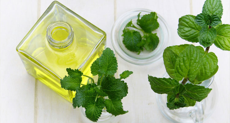 peppermint oil for fleas
