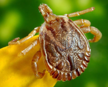 permethrin for ticks